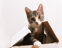 The cat is sitting in a box. Royalty Free Stock Images