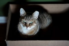 Cat sitting in box royalty free stock photography