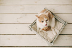 Cat sitting in box on white wooden floor Stock Photos