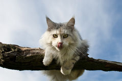 Cat sitting on branch Stock Image