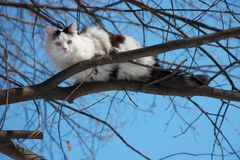 Cat sitting on a branch in winter sunny day Stock Image