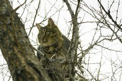 Cat sitting on the branches of a tree in late autumn stock image