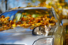 Cat sitting on a car on autumn day Royalty Free Stock Photos