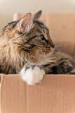 Cat sitting in cardboard box Stock Image