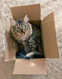 Cat sitting in cardboard box Royalty Free Stock Photography
