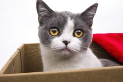 Cat meow pet. The cat is sitting in the  carton Royalty Free Stock Images