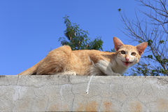 Cat sitting on the cement fence Royalty Free Stock Photo