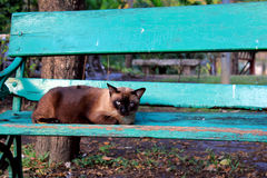 Cat sitting on the chair. In park, Thailand Stock Images