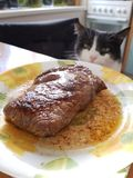 Cat at the table. Cat sitting at dinner table, steak on a plate and cat in the background stock images