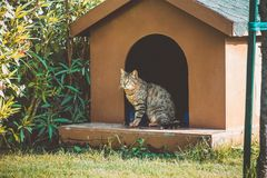 A cat sitting in a doghouse in the garden royalty free stock image