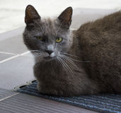 Cat sitting on the doormat. A photo of the Cat sitting on the doormat Royalty Free Stock Image
