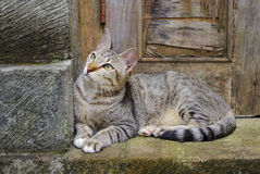 Cat sitting on a doorstep Stock Image
