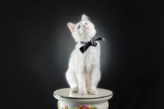 Cat sitting down Royalty Free Stock Image