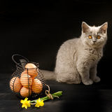 Cat sitting with Easter eggs and flowers. Royalty Free Stock Image