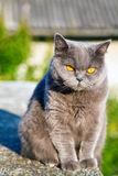 Cat sitting on the edge of parapet Royalty Free Stock Photography