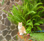 A cat sitting by the edge of a pond in the caribbean stock images