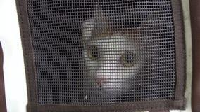 Cat Sitting effrayée dans le transporteur d'animal familier Violence animale banque de vidéos