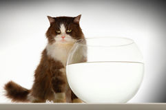 Cat Sitting By Empty Fishbowl images stock