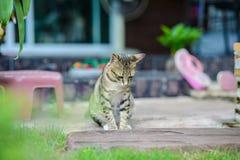 Cat Sitting en casa Fotos de archivo