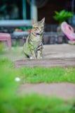 Cat Sitting en casa Imagen de archivo libre de regalías