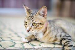 Cat Sitting en casa Imagen de archivo