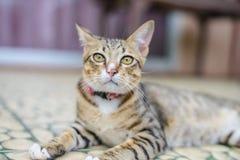 Cat Sitting en casa Fotos de archivo libres de regalías