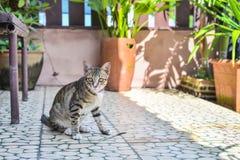 Cat Sitting en casa Fotografía de archivo