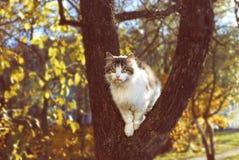 Cat Sitting en el árbol en otoño Imágenes de archivo libres de regalías