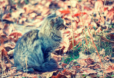 Cat sitting on the fallen leaves Royalty Free Stock Photos