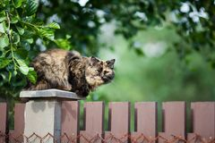 Cat sitting on the fence.  Royalty Free Stock Photos
