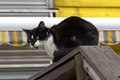 Cat. Sitting on a fence royalty free stock image