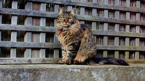 Cat. A cat sitting on a fence Stock Photography