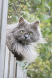 Cat sitting on fence Royalty Free Stock Photography