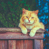 Cat Sitting On The Fence roja Foto de archivo