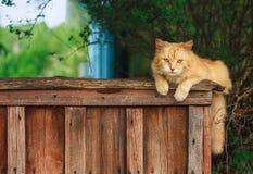 Cat Sitting On The Fence vermelha Imagem de Stock