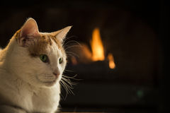 Cat sitting by a fireplace. Cat relaxing by a warm fire Stock Image