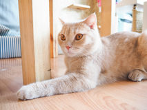 Cat sitting on the floor Stock Images