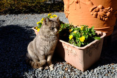 Cat sitting beside the flower Royalty Free Stock Photo