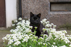 Cat. A cat sitting among flowers Stock Photography