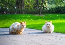 Cat Sitting On Footpath in een park stock foto's