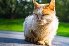 Cat Sitting On Footpath en parc photographie stock libre de droits