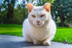 Cat Sitting On Footpath en parc de la Chine photo libre de droits