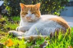 Cat Sitting On Footpath en un parque fotos de archivo