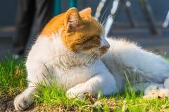 Cat Sitting On Footpath en un parque imagen de archivo
