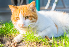 Cat Sitting On Footpath en un parque foto de archivo