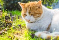 Cat Sitting On Footpath en un parque de China fotografía de archivo libre de regalías