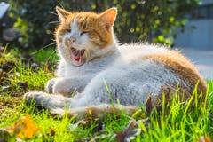 Cat Sitting On Footpath in un parco fotografia stock