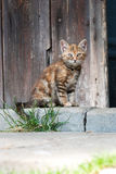 Cat sitting in front of barn door Stock Images