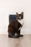 Cat sitting in front of the cat door Royalty Free Stock Photo