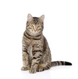 Cat sitting in front and looking at camera. isolated Royalty Free Stock Images